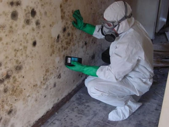 Mold Removal in Santa Monica CA
