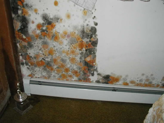 Mold Removal in Pomona CA