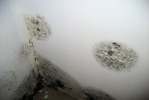 Mold Removal in Bell CA