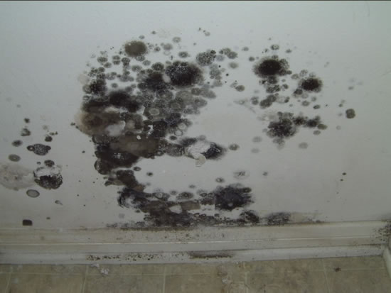 Mold Removal in Santa Clarita CA