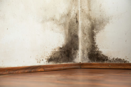 Mold Removal in Running Springs CA