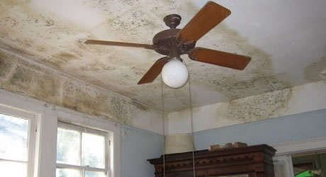 Mold Removal in Sunland CA