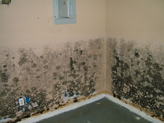 Mold Removal in Orange CA