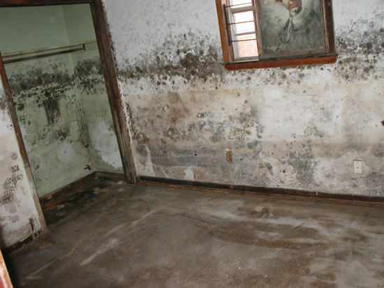 Mold Removal in Wildomar CA