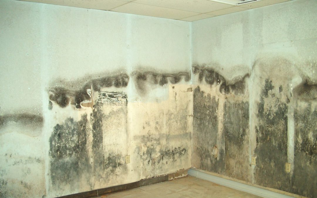 Mold Removal in Covina CA