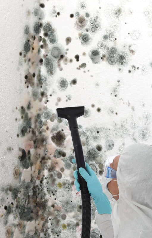 Mold Removal in Hawthorne CA