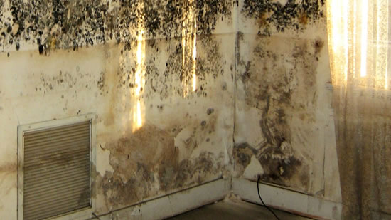 Mold Removal in Fontana CA