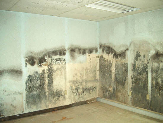 Mold Removal in Moreno Valley CA